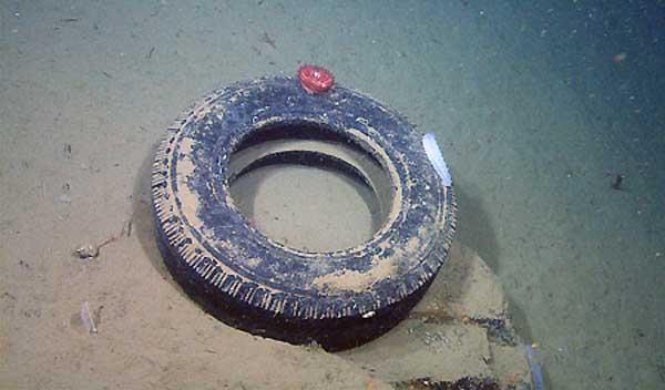 basura en el mar rueda