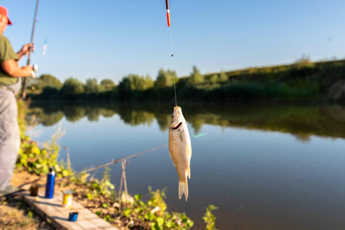 mejores hilos de pescar
